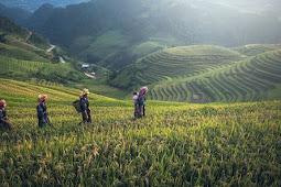 Peluang Investasi Hijau di Negara Indonesia