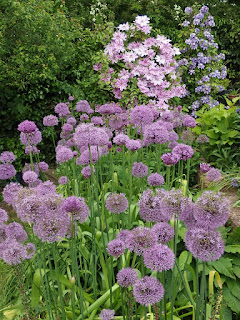 Clematis and alliums
