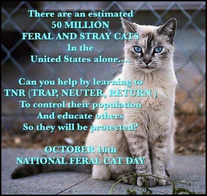 National Feral Cat Day Wishes pics free download
