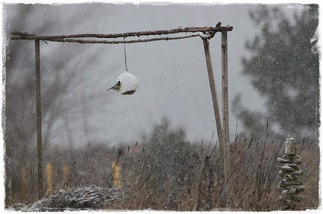 Mésange sous la neige