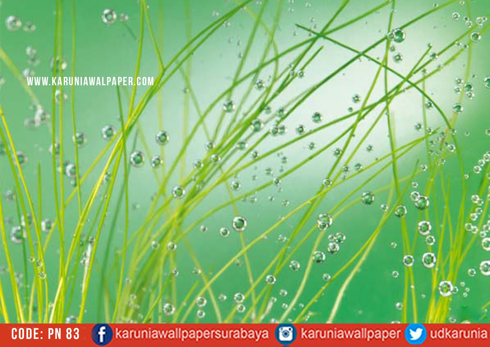 jual wallpaper hijau tumbuhan