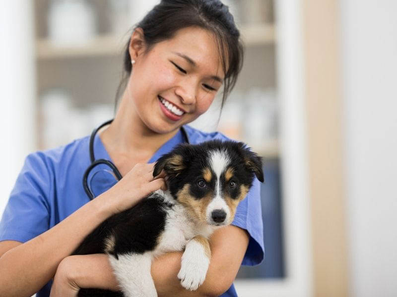 puppy Health And Care