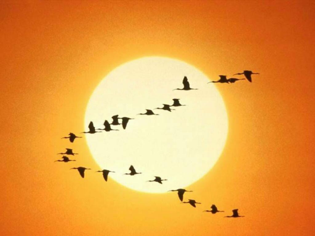 aves volando · conlosochosentidos.es