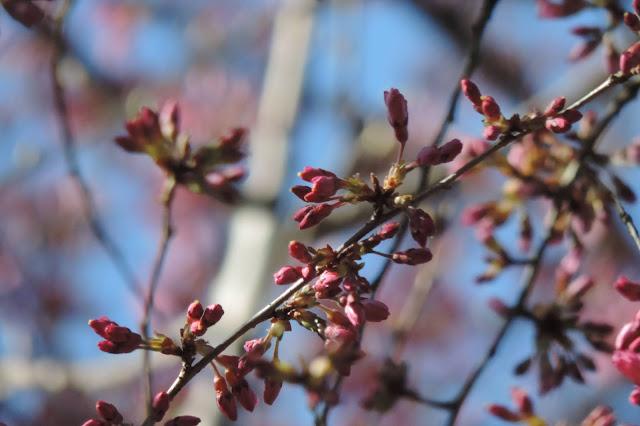 Jarní fotografie