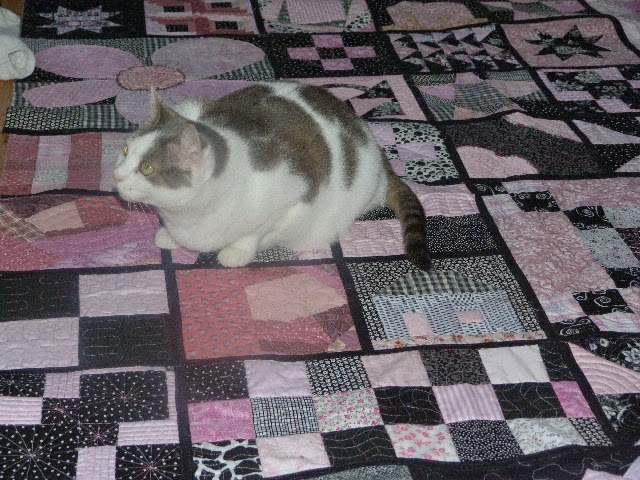 chquilts: Black and white and pink all over quilt