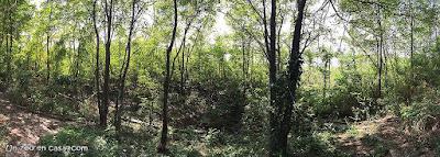Microforest Shangai Cape Nanhui