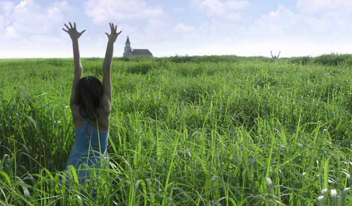 film in the tall grass (review)