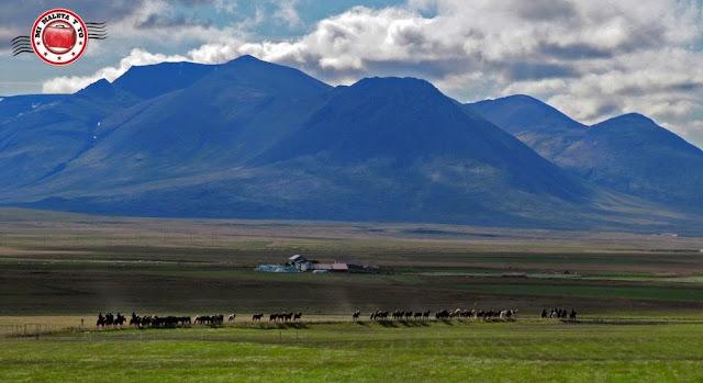 Caballos en el valle de Thingeyrar, Islandia