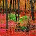 Иде есен. Защо листата променят цвета си?