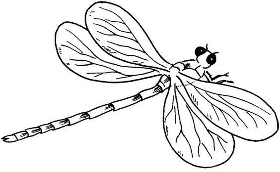Tranh tô màu con chuồn chuồn