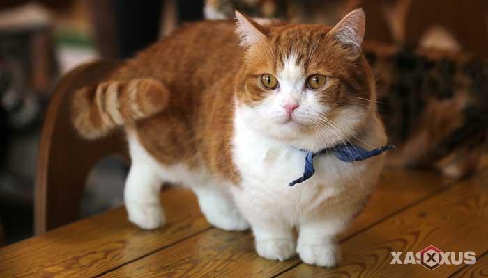103 Arti Mimpi Kucing Lengkap Menurut Islam, Primbon Jawa, dan Psikolog