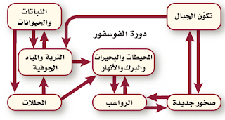مستويات الفوسفور