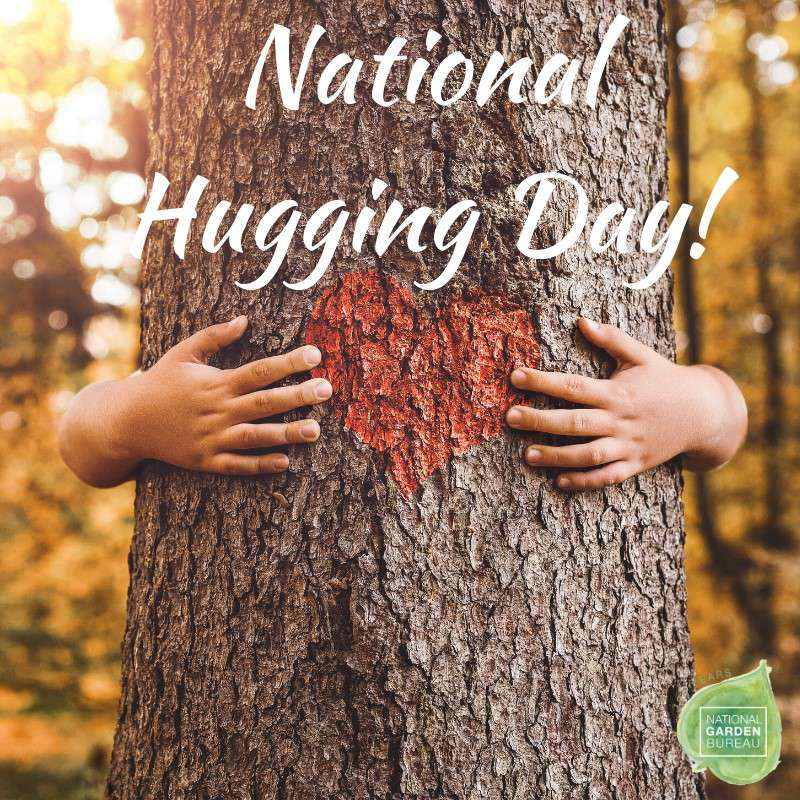 National Hugging Day Wishes Sweet Images