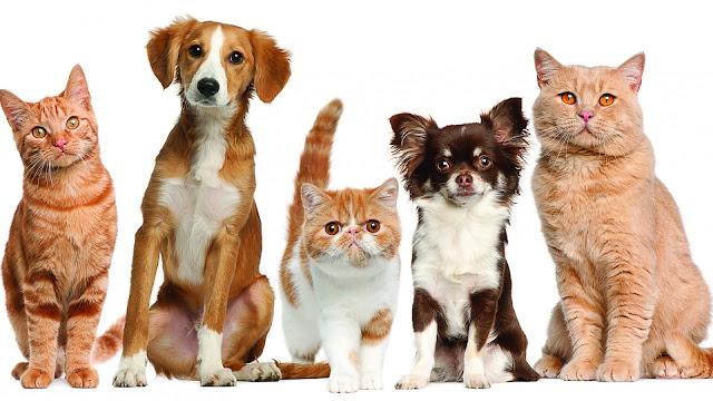 Mačke i psi download besplatne pozadine za desktop 1920x1080 HDTV 1080p
