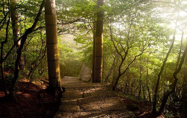 Selva HuangShan
