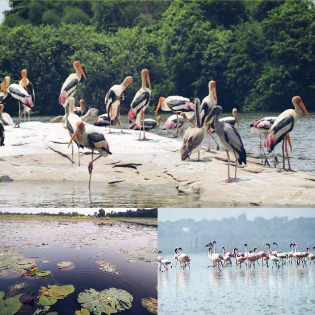 Kanwar Lake(Bihar)