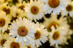 كوكتيل صور ورود وازهار من الطبيعة