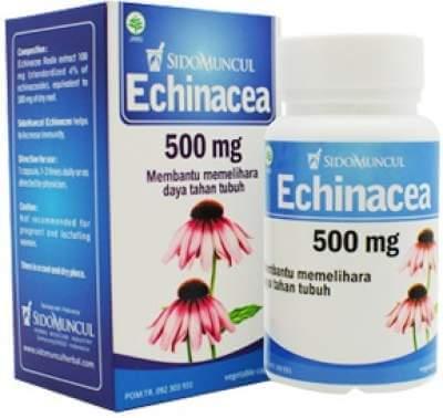 Sido Muncul Echinacea