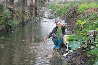 Rửa rau trực tiếp dưới nguồn nước bẩn