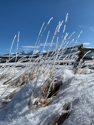 frost on grasses with a log fence and mountains behind