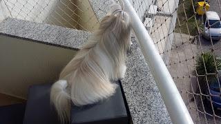 escadas panorâmicas para cães em sacadas