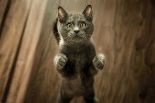 gambar kucing manis mencintai pemiliknya