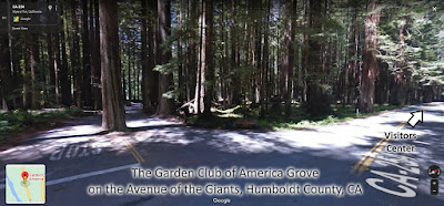 Garden Club of America Grove on the Avenue of the Giants - Humboldt County CA - gvan42
