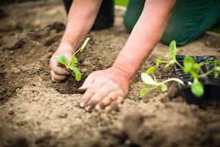 gardening addiction treatment