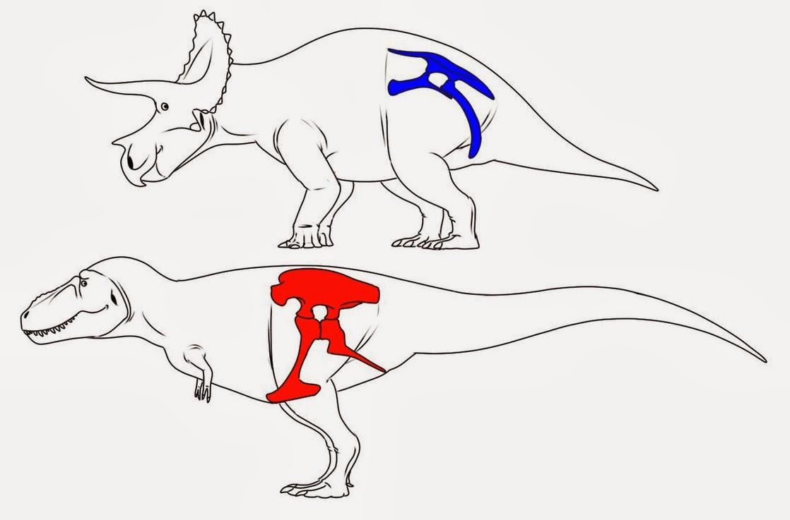 La Ilusion De Aprender 3 Clasificacion De Los Dinosaurios Segun Su Cadera Los ornitisquios se caracterizaron por contar con cuernos, crestas y muchos dientes, como arma para protegerse de los. los dinosaurios segun su cadera
