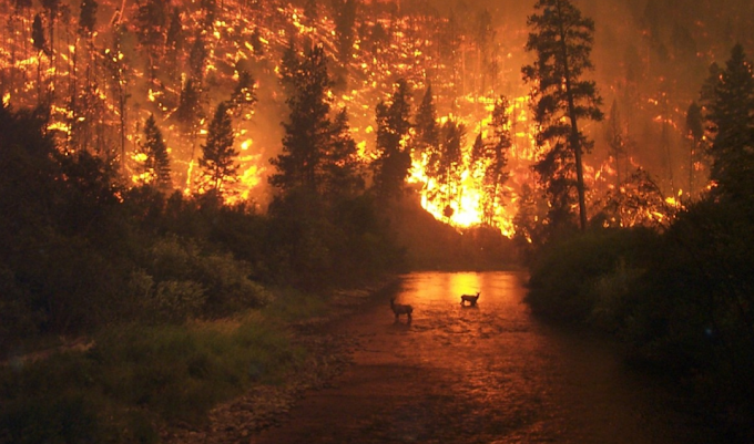 FOREST FIRES: Blame for climate change?
