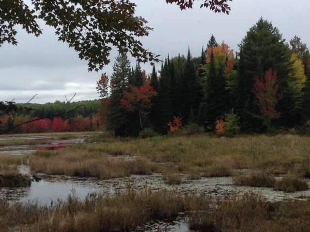 Bog seen from the highway. Between Round Lake and Alice, Ontario