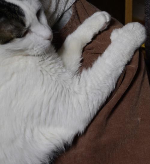 写真,猫,Cat,photo