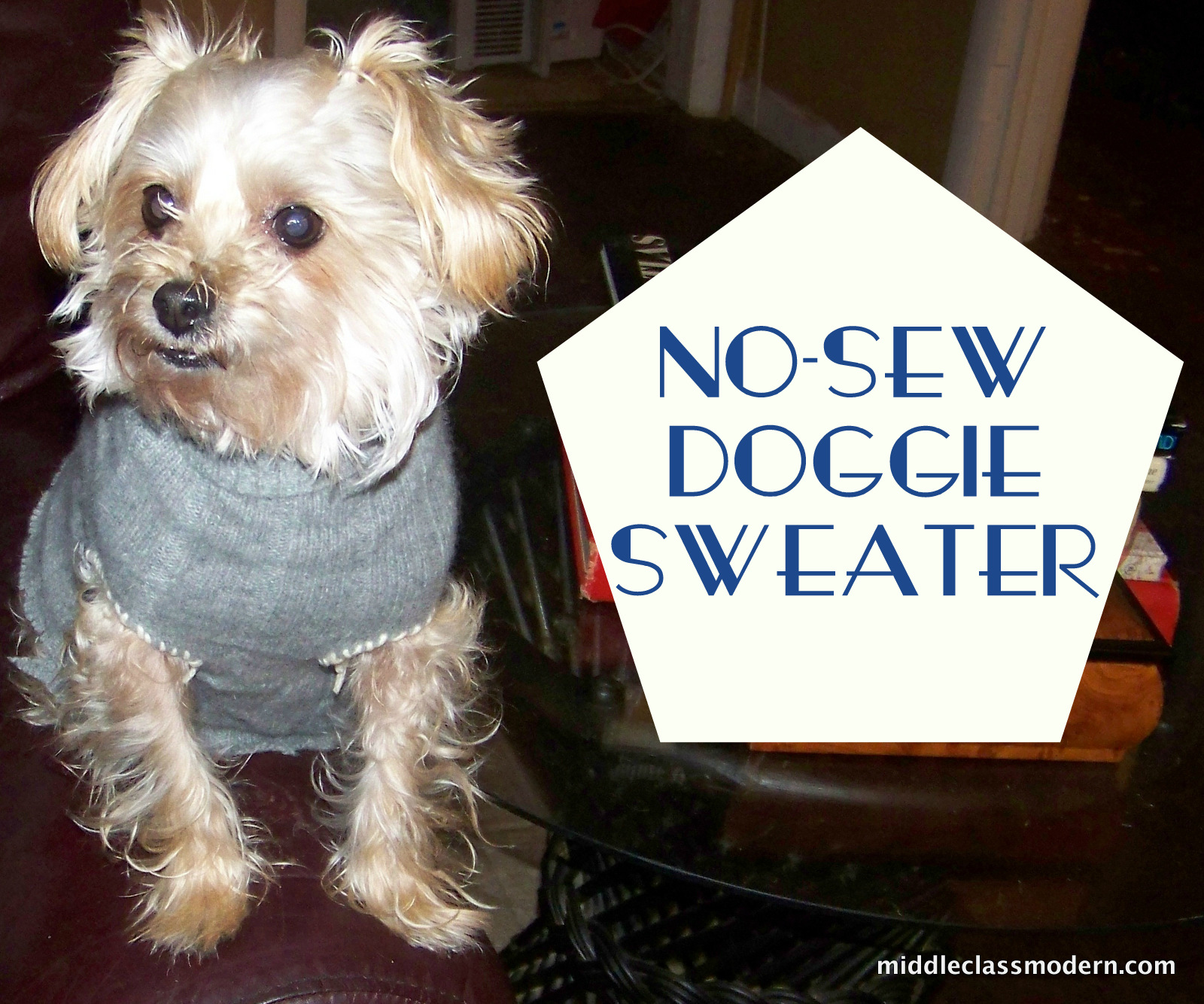 Middle Class Modern Doggies Get Cold Too A No Sew Dog