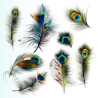 मोर के पँख