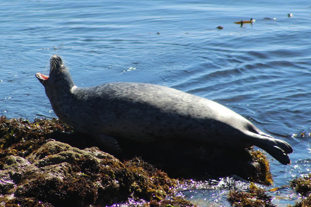 17-Mile Drive Seal