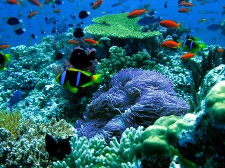 Pusat Marine Indonesia