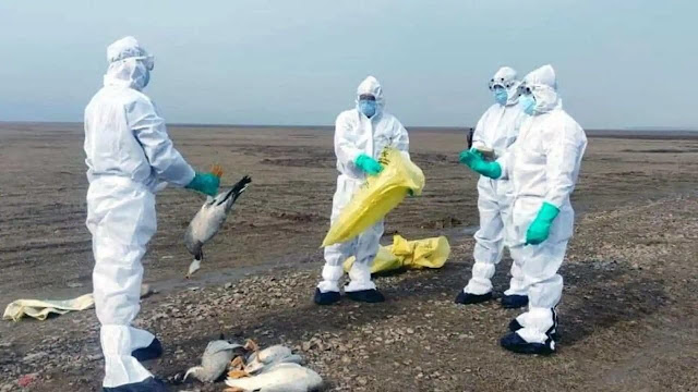 China-reports-first-human-case-of-h10n3