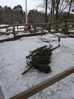 Aspudden in Hägersten, Sweden