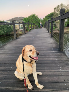 Abby is sitting on a timber bridge. The full moon is visible in the blue and pink sky.