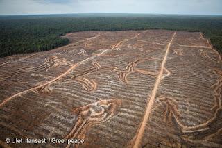 Tanah Adat dan Lanskap Hutan Papua Terancam Deforestasi
