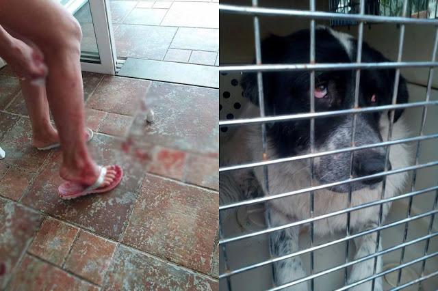 Ο Δήμος εμβολιάζει, στειρώνει και παρέχει ιατρική περίθαλψη και στέγη μέχρι την ίαση των σκυλιών