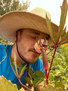 Farmer Smelling Okra Flower
