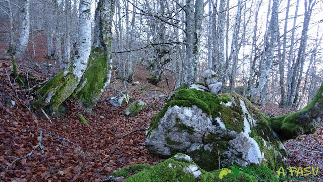Roca en el Hayedo de Fresneu