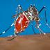 Casos de chikungunya aumentam para 123 e de dengue para 12 em São Nicolau