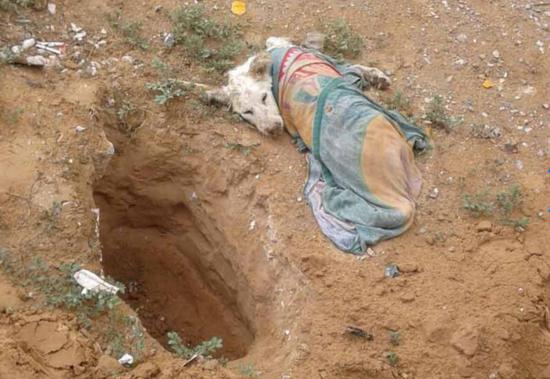 Detienen en Juárez a hombre que iba enterrar vivo a un perro