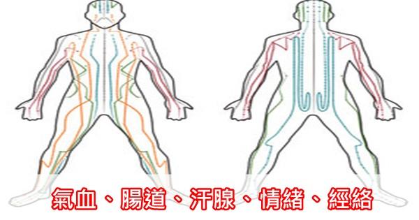 身體5個地方堵住了,疾病就會隨之而來!靠譜疏通方法趕緊收藏!(氣血、腸道、汗腺、情緒、經絡)