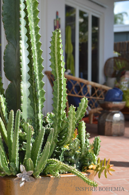 Poolside Cactus Planters - Designer Cactus and Succulent Planters Garden Design Inspire Bohemia - Miami and Ft. Lauderdale Succulent Business
