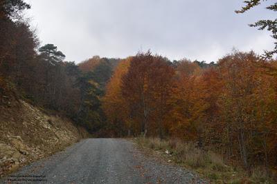 Μείωση του τέλους αντιρρήσεων για τους δασικούς χάρτες