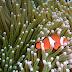 Bali #9 : Sous l'océan