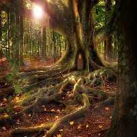 FunEscapeGames - Tree Hou…
